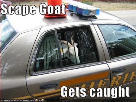 Scape Goat... Gets Caught